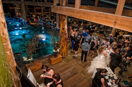 Chris Boar_Ucluelet Aquarium Wedding